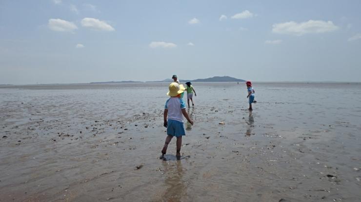 진촌해변에서 갯벌체험을 하고 있는 어린아이 셋명과 어른 한명이 있는 모습의 사진 이미지입니다.