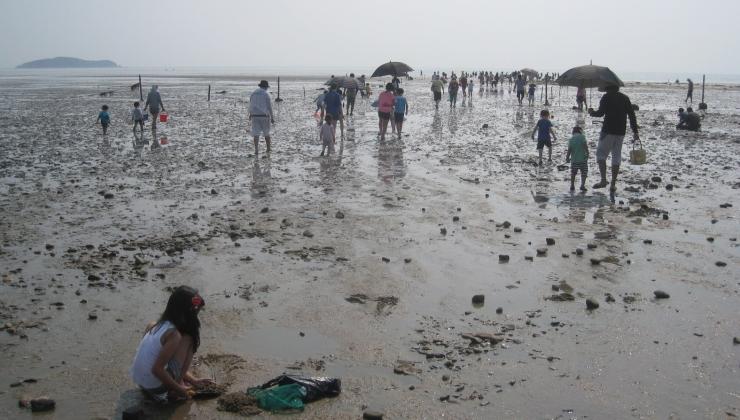 용유도 미사란 해변 갯벌에서 많은 사람들이 조개줍기와 갯벌을 걸어가는 모습을 찍은 사진 이미지입니다.