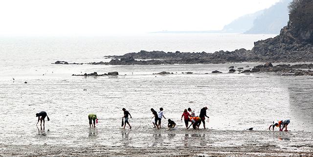 장봉도 갯벌에서 호미로 조개를 잡고 있는 아이들과 어른들의 모습을 찍은 사진 이미지입니다.