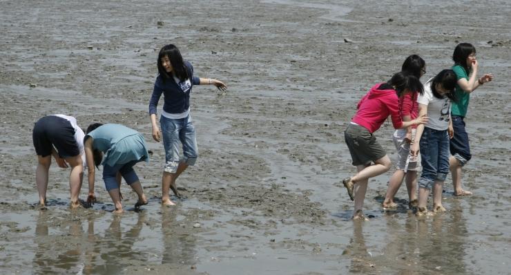 하나개 해변의 갯벌에서 맨손으로 조개를 줍고 있는 아이들의 모습을 찍은 사진 이미지입니다.