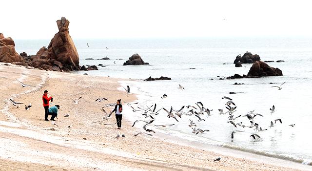 선녀바위 해변가에 갈매기가 보이며 모래사장에서 산책중인 사람들을 찍은 풍경 사진 이미지입니다.